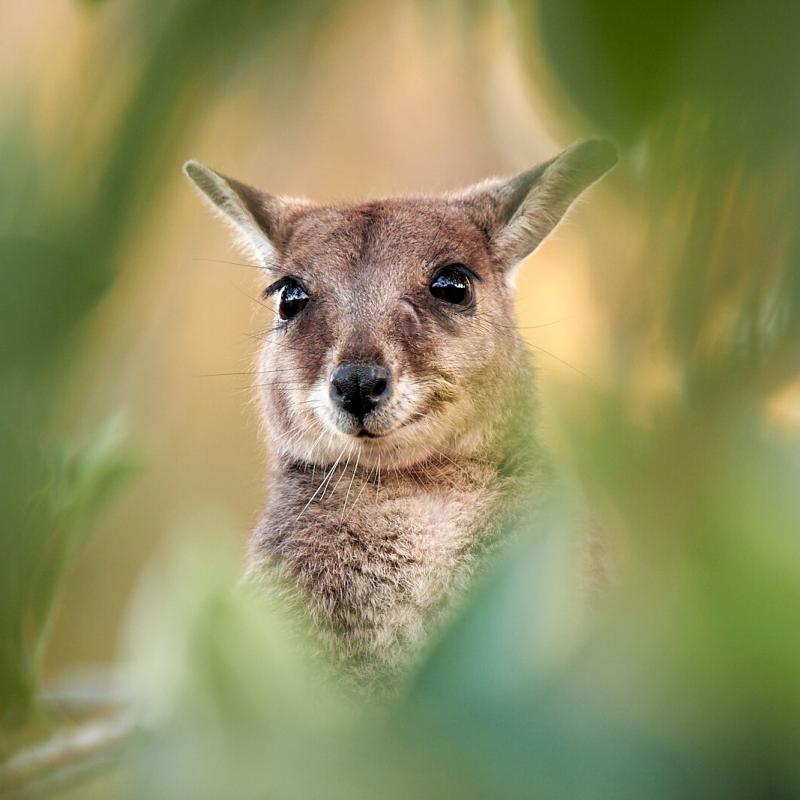 Wildlife s technikou Fujifilm
